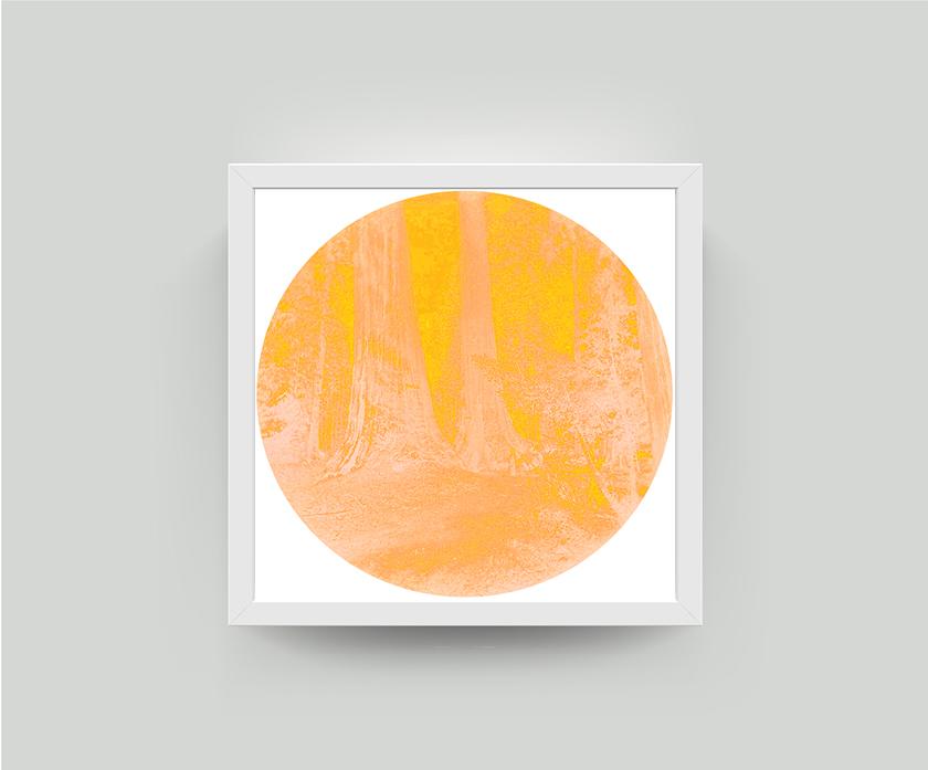 carleton mango